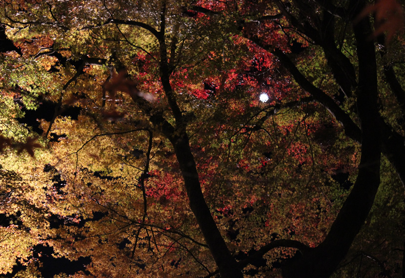 富士山 信仰の対象と芸術の源泉の画像 p1_32