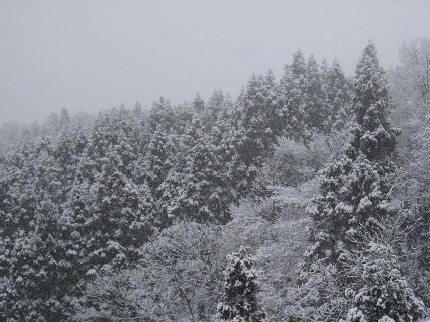 白川郷・五箇山の合掌造り集落